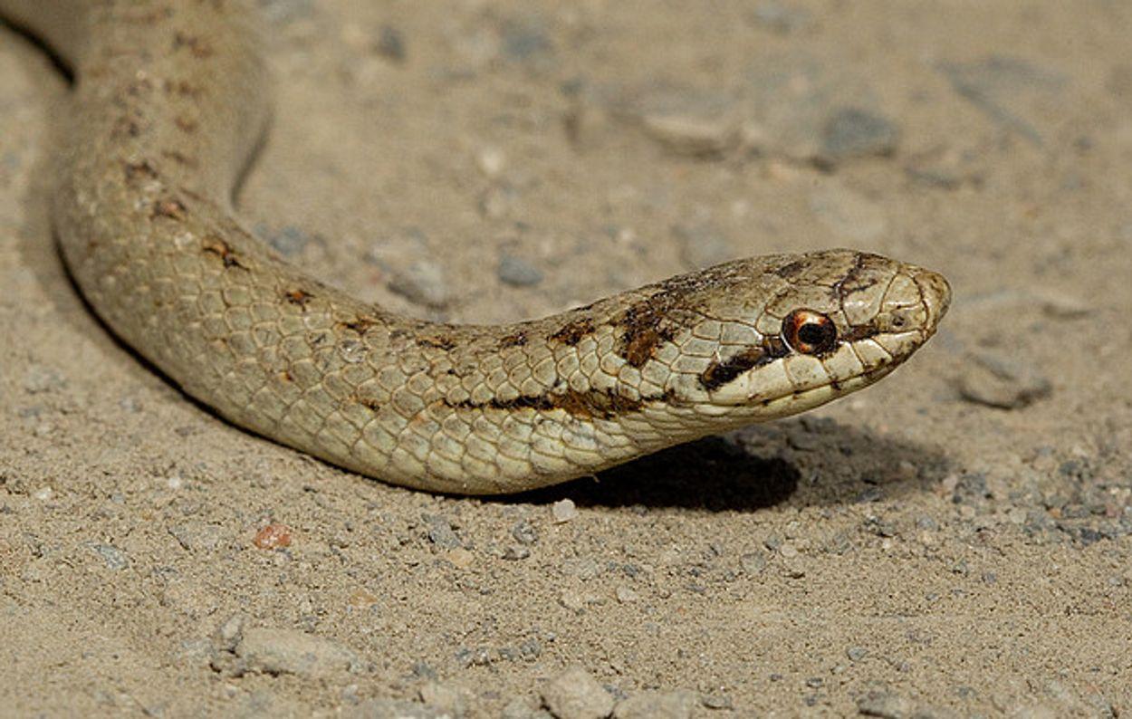 Afbeelding van TV: gladde slang en stelende meeuwen