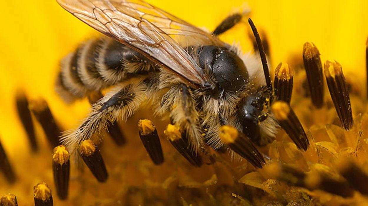 Afbeelding van Verbod op bijengif