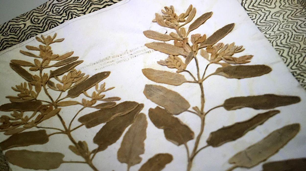 Afbeelding van Botanisch erfgoed
