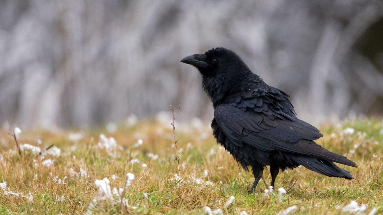 Afbeelding van Natuurmonologen, de fenolijn en alle overige onderwerpen in Vroege Vogels