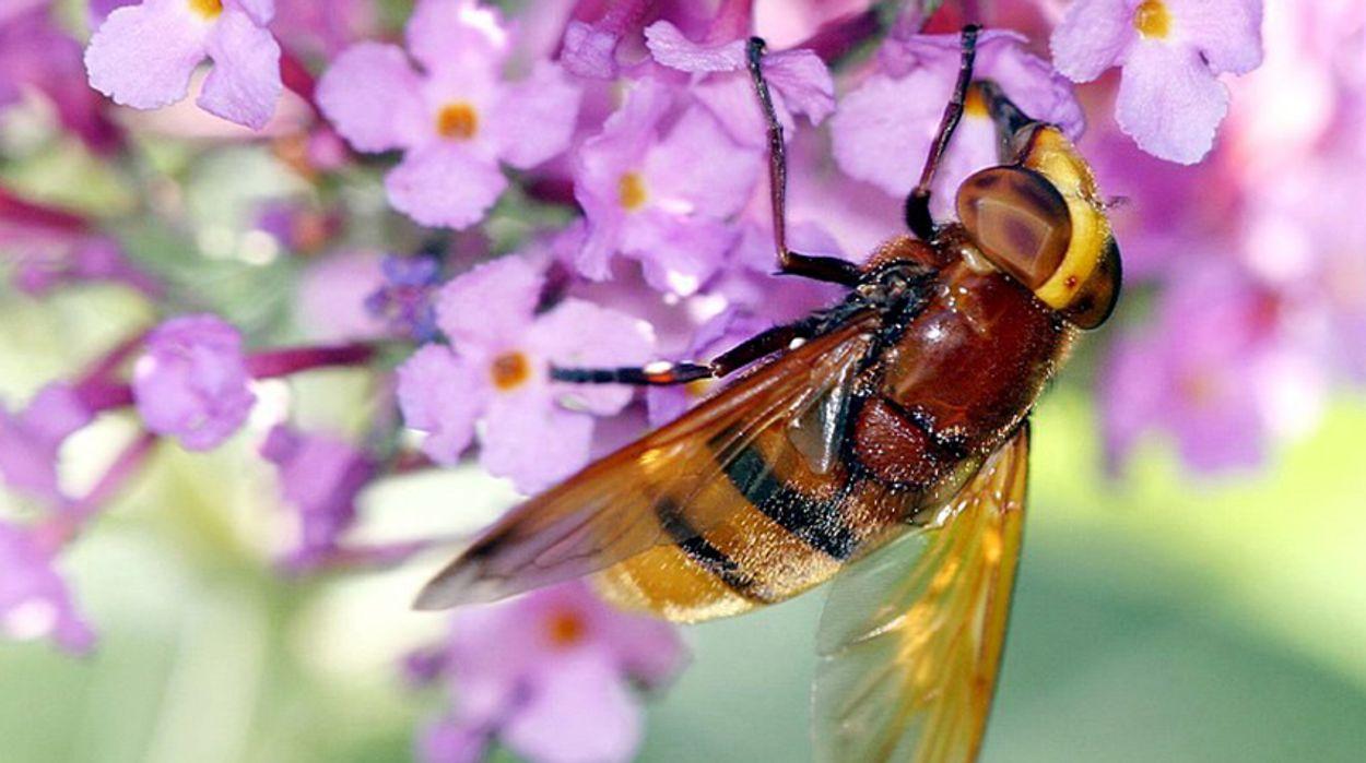 Afbeelding van Nationaal insectenonderzoek met speciale camera's