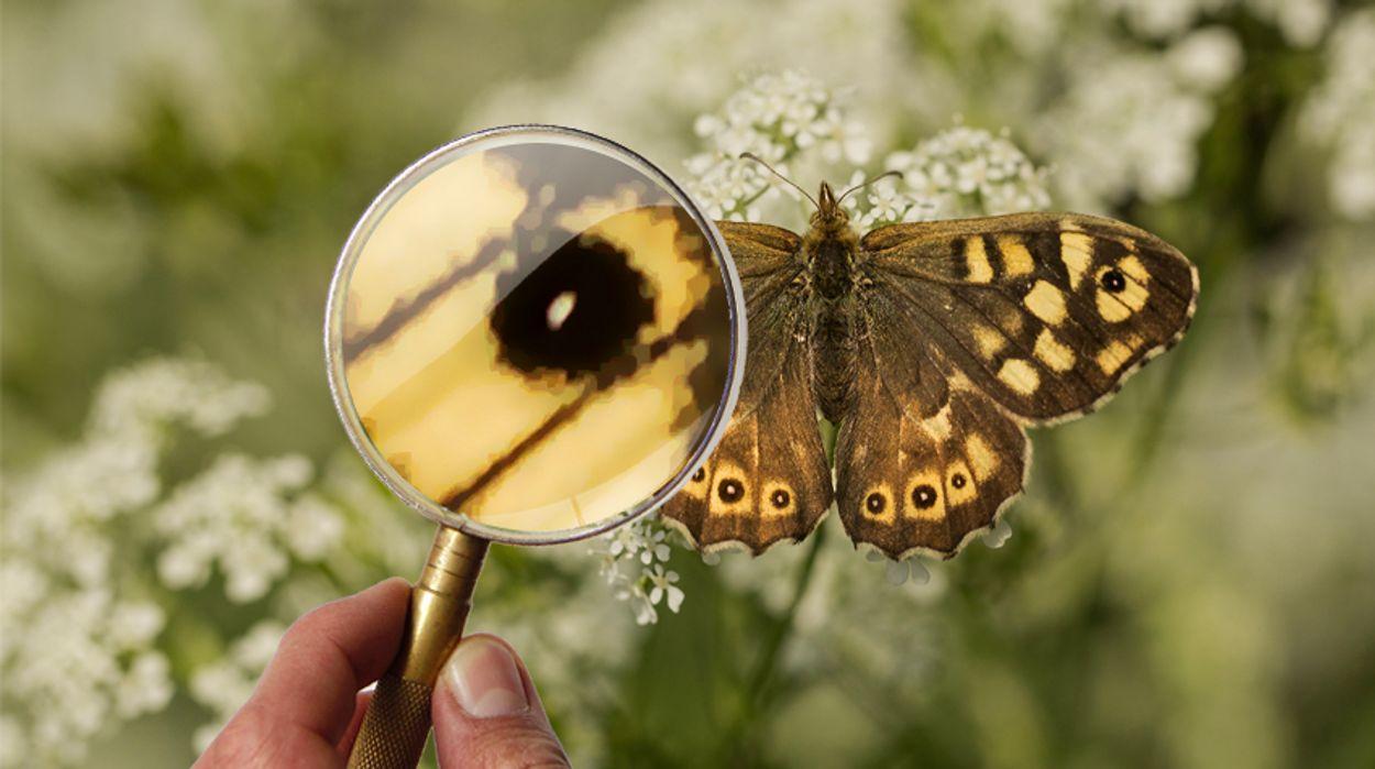 Afbeelding van Memory: Test je vlinderkennis