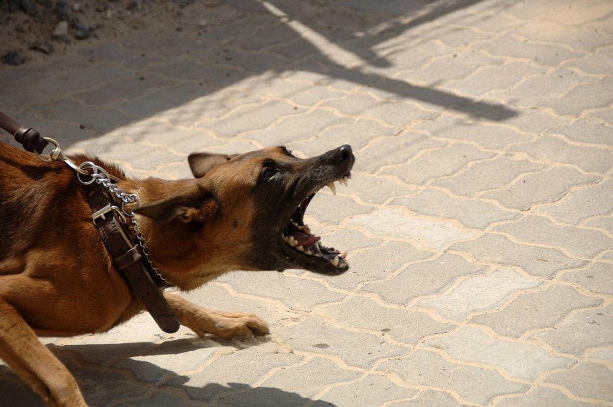 Afbeelding van 'Na dierenmishandeling houdverbod mogelijk'