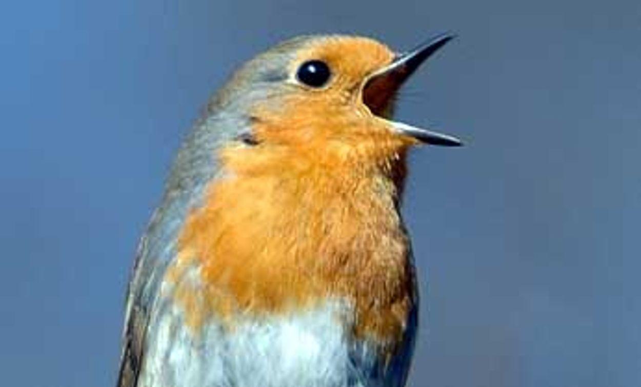 Afbeelding van Vogelzang in de herfst