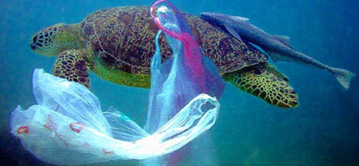Afbeelding van Oproep: 'Hergebruik plastic verantwoord'