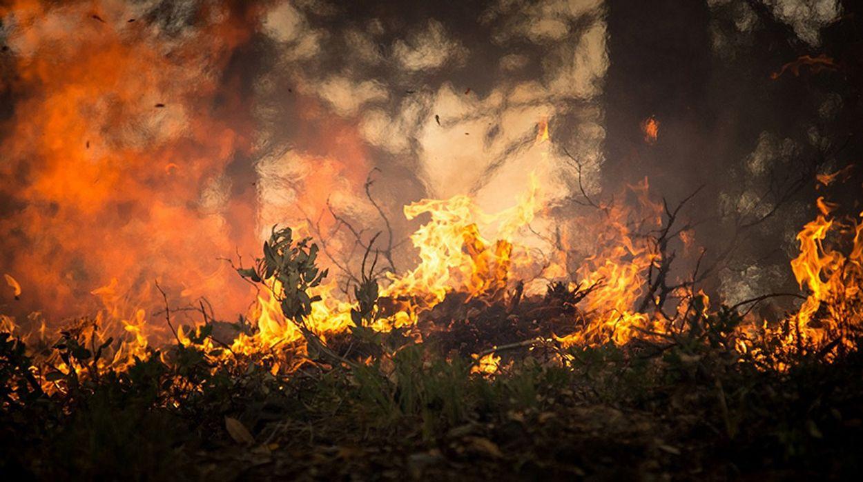 Brandgevaar Code Oranje.Vroege Vogels Hoog Natuurbrandgevaar In Brabant En Zeeland