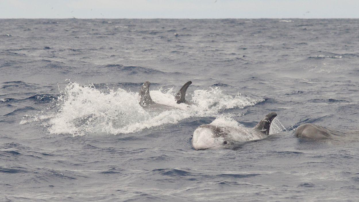 Afbeelding van De wonderlijke grijze dolfijn