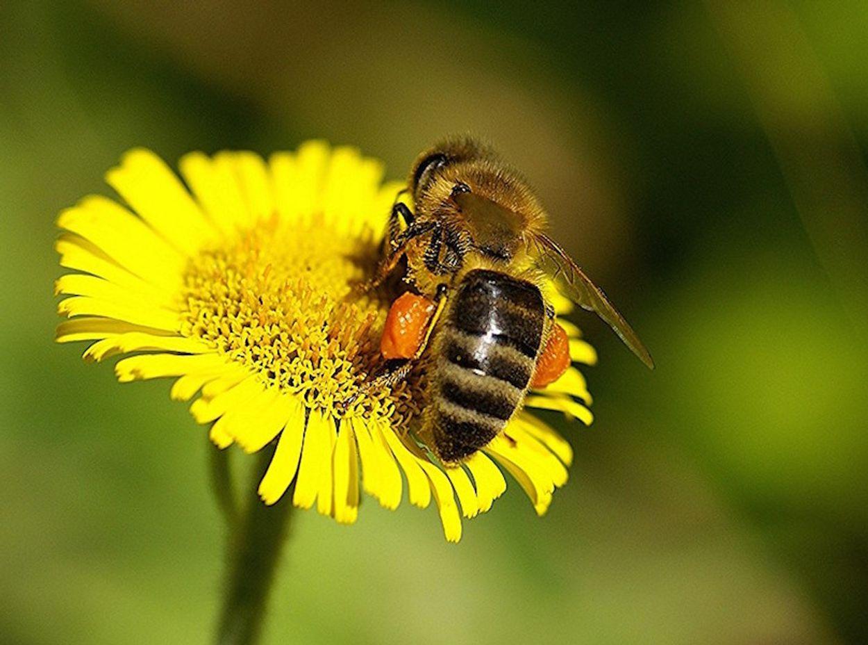 Afbeelding van Verbod bijengif zonder zuiveringsinstallatie
