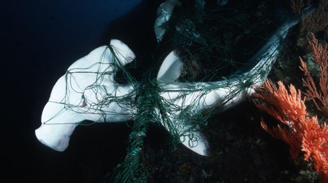 Afbeelding van Grote visbedrijven zetten eerste stappen om verloren vistuig te verminderen