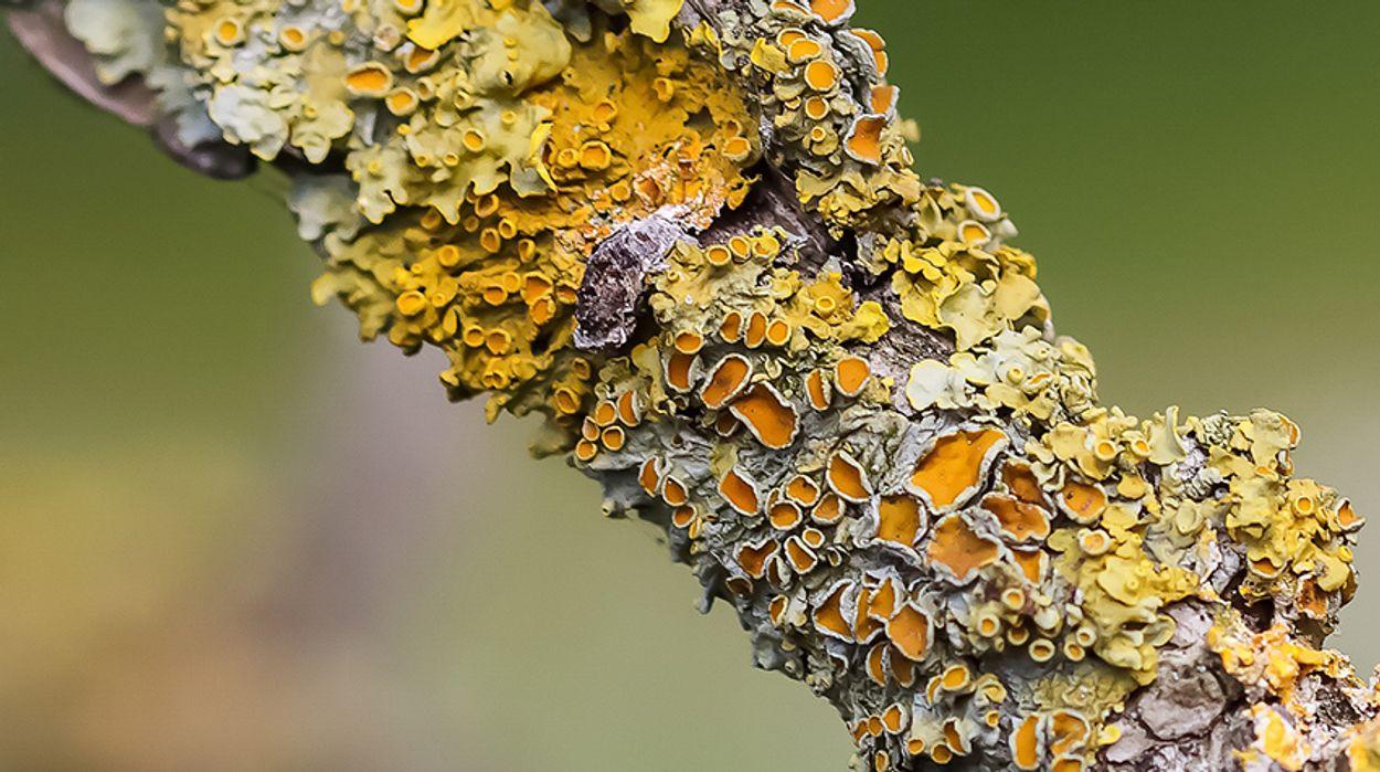 Afbeelding van Groots boek over mossen en korstmossen