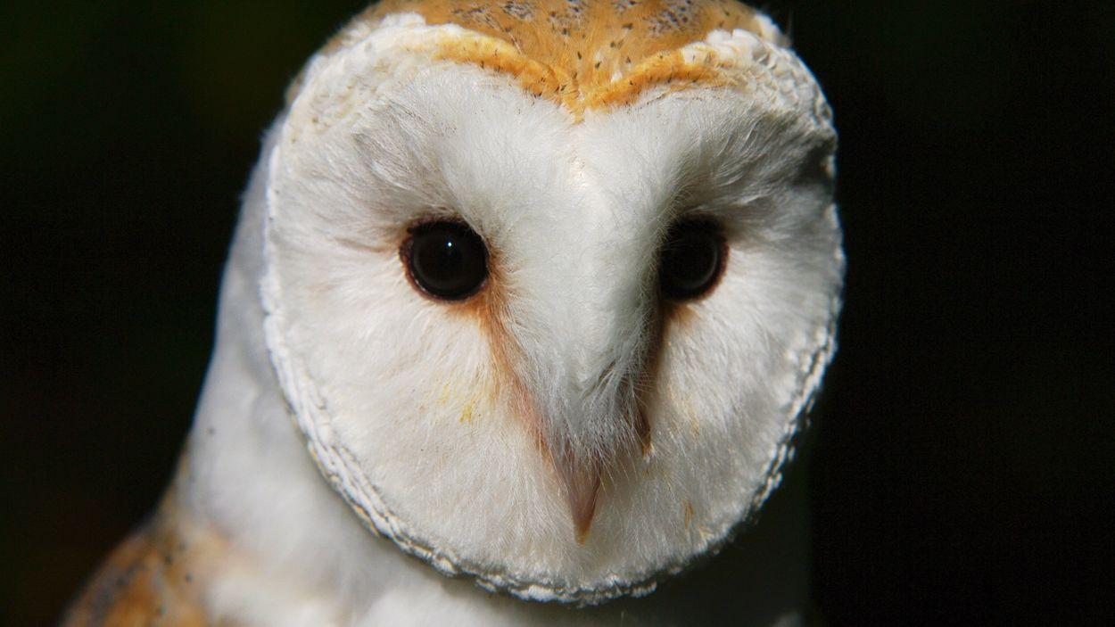 Afbeelding van Geluidencursus: uilen