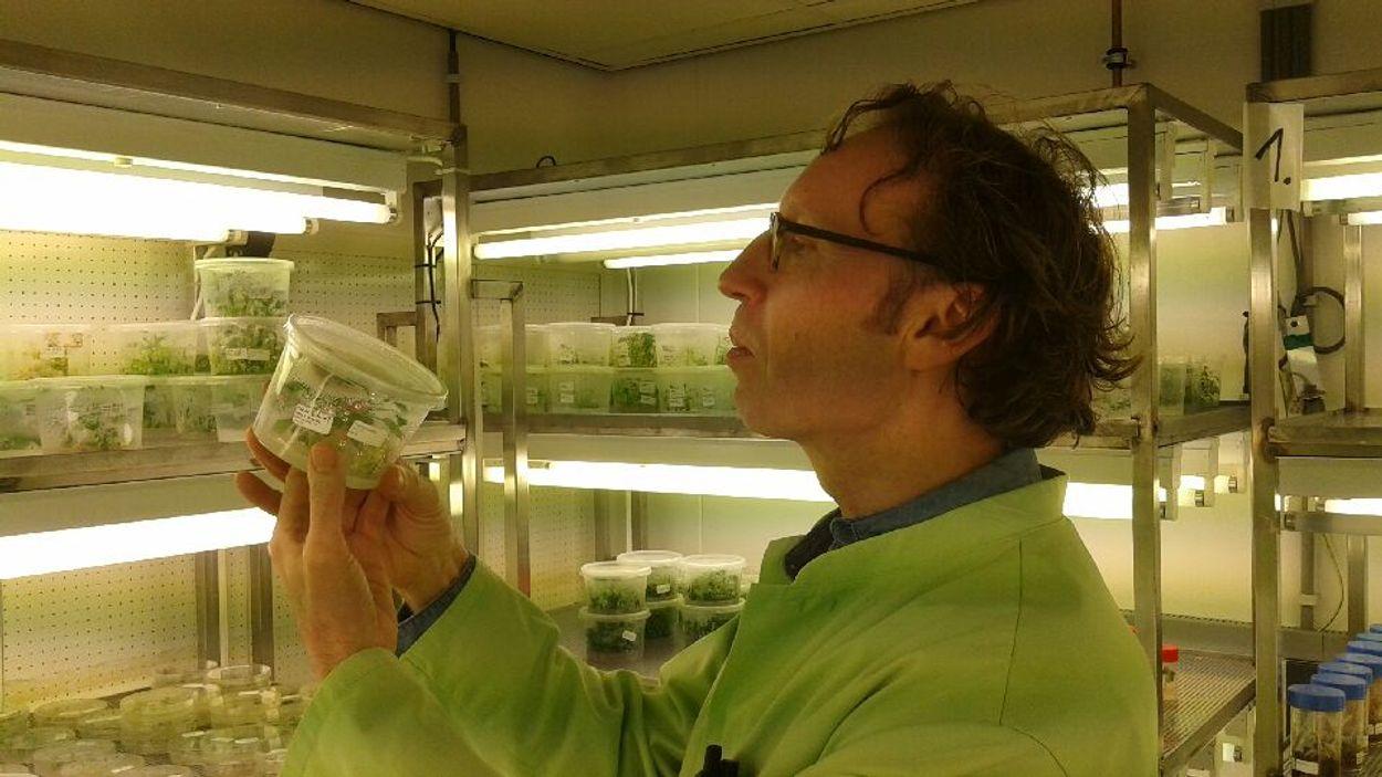 Jan Schaart CRISPR-Cas