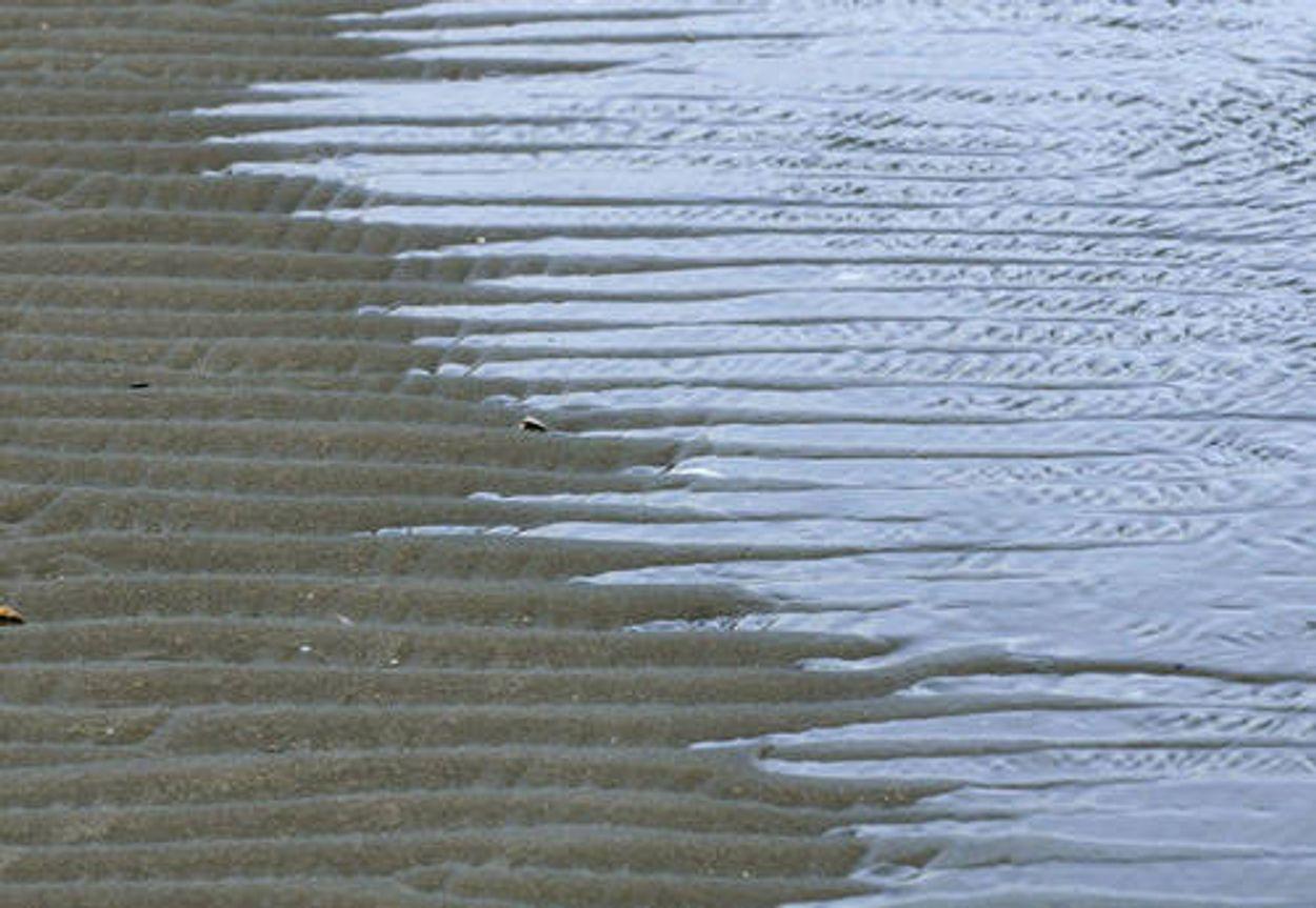 Afbeelding van Rijkswaterstaat ontpoldert Noordwaard