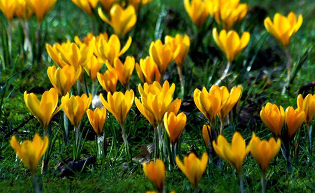 Afbeelding van Fotoserie: Vroege lentekriebels