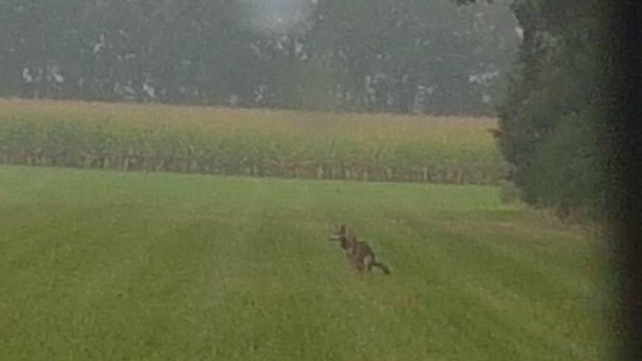 Afbeelding van Wolf van Beuningen blijkt Duits vrouwtje
