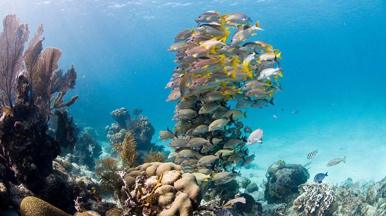Afbeelding van Permanent verbod op olieboringen rond enorm koraalrif Belize