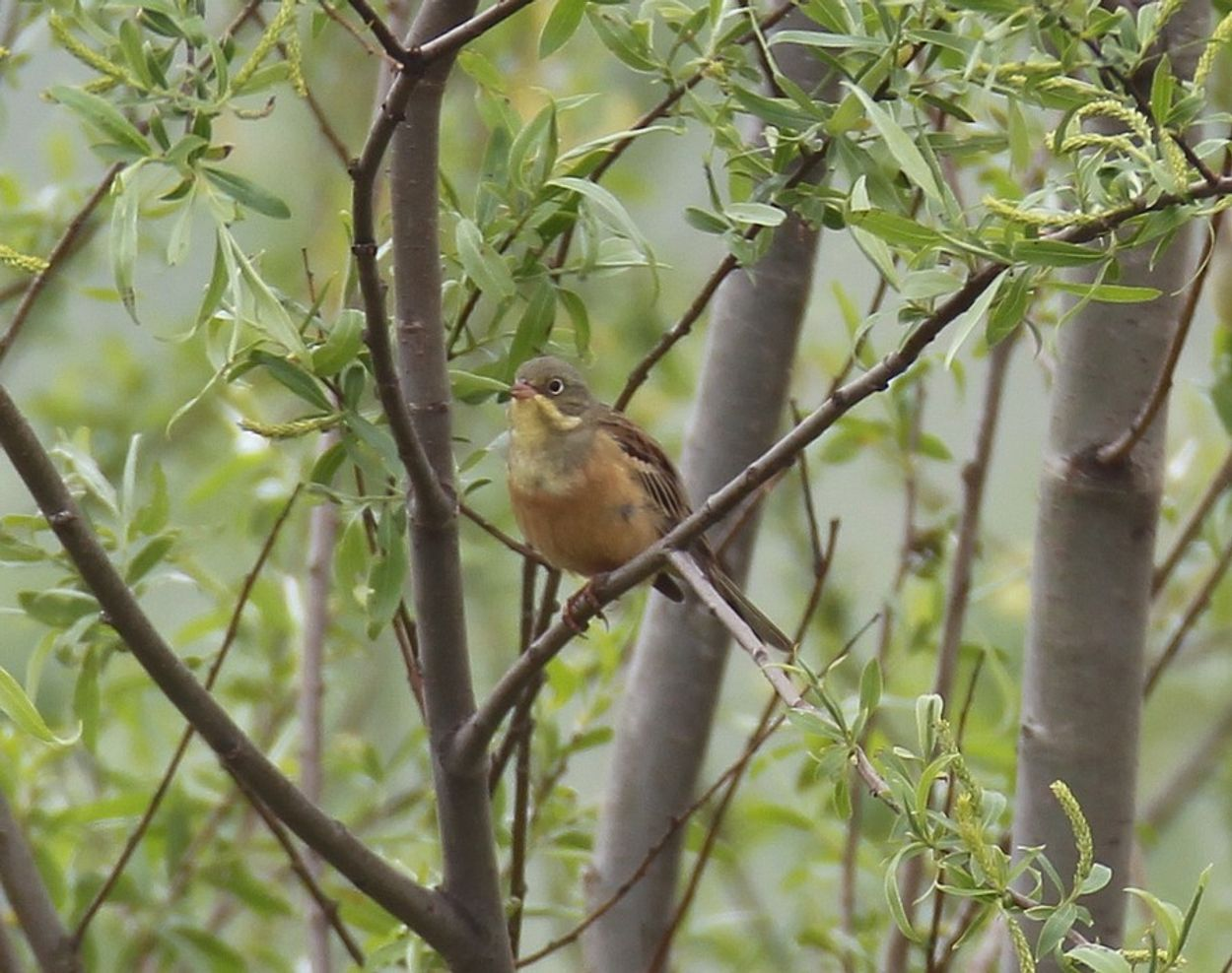 Afbeelding van Vogelbevolking Achterhoek sterk veranderd