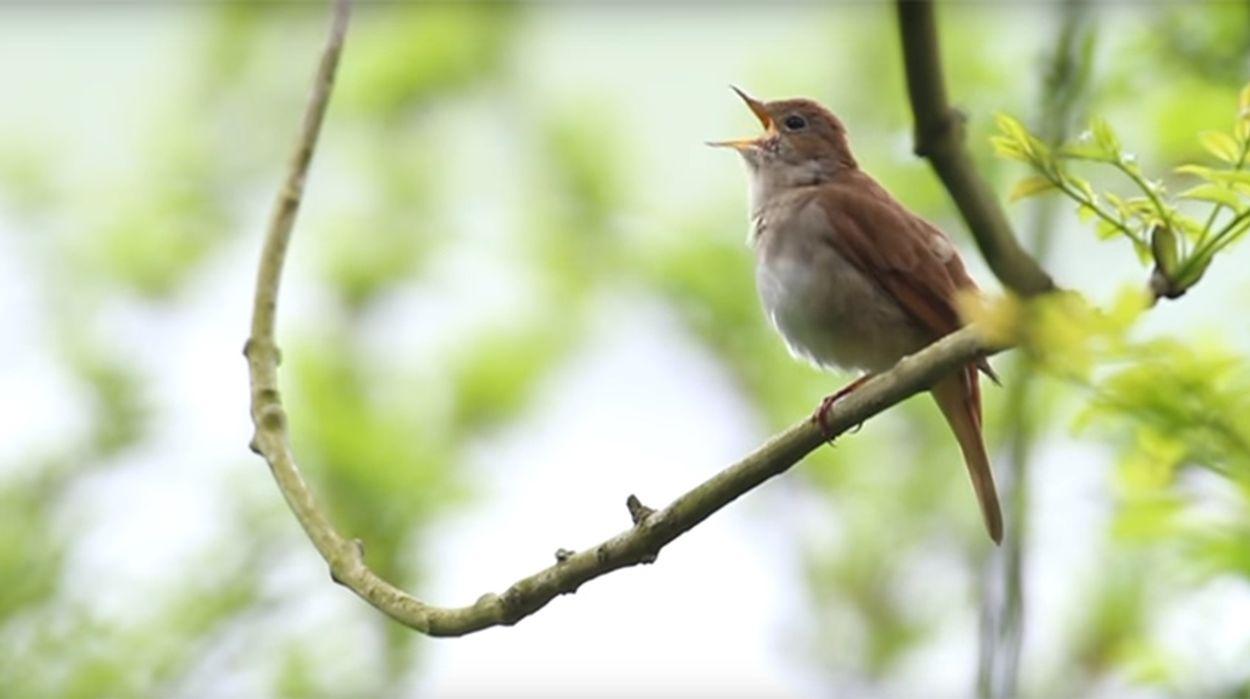 Afbeelding van Vogels aan het woord