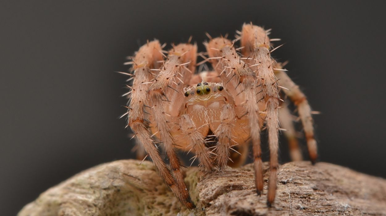 Afbeelding van Fotoserie: ode aan de spin