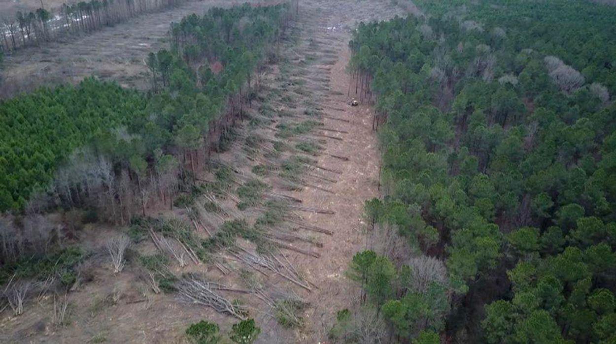 Afbeelding van Zembla: bos als brandstof