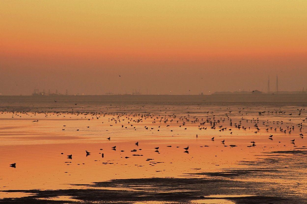Afbeelding van Groen licht voor zoutwinning in Waddenzee
