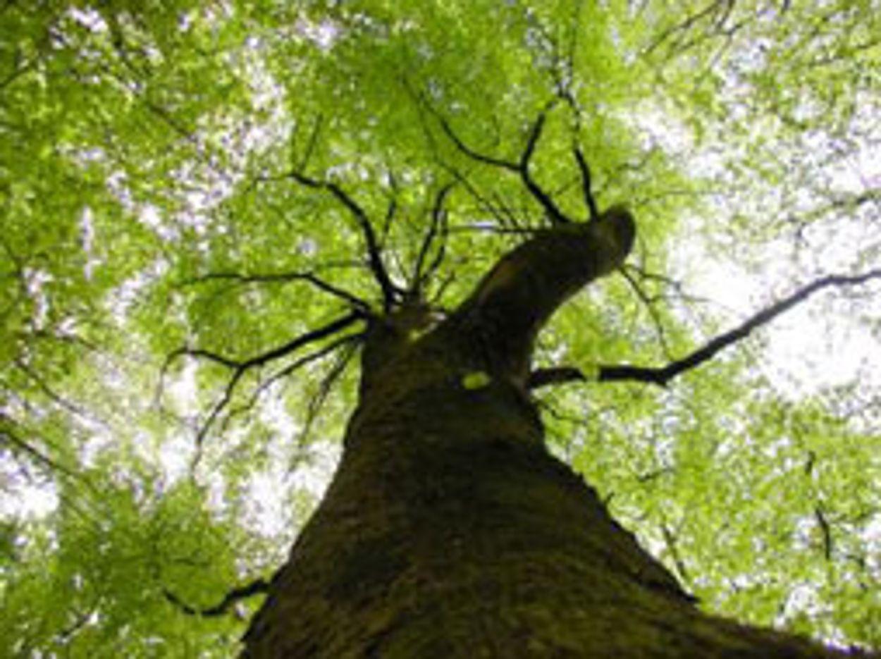 Afbeelding van Dronten krijgt bos voor zeldzame bomen en struiken