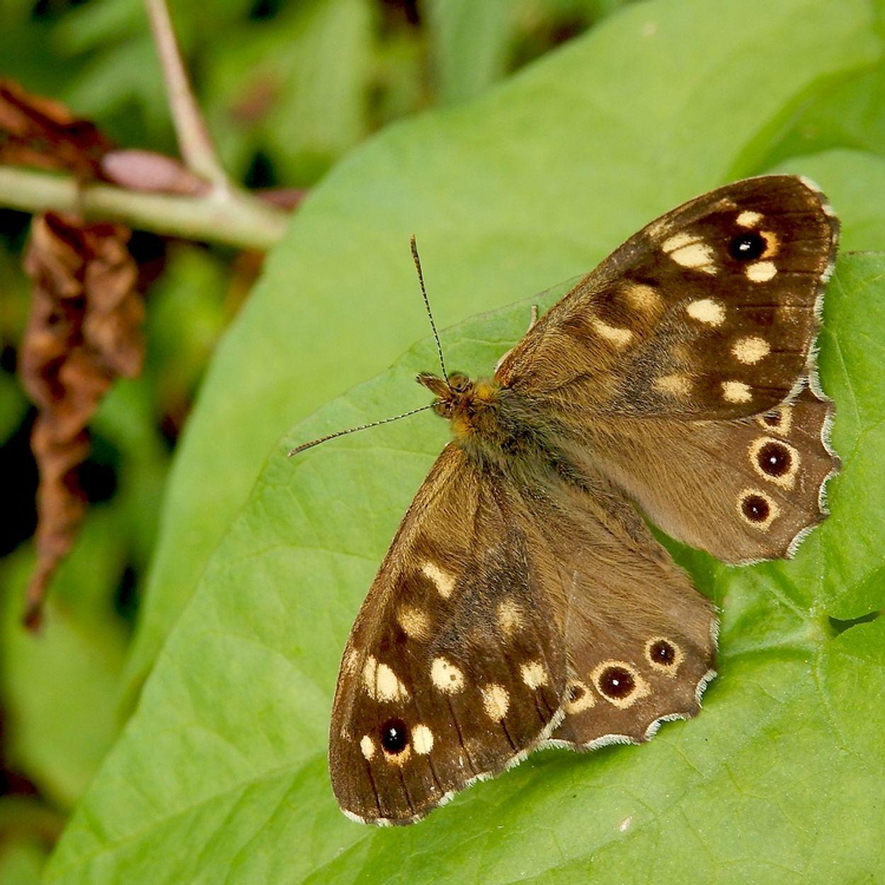Afbeelding van Voorjaar vol vlinders