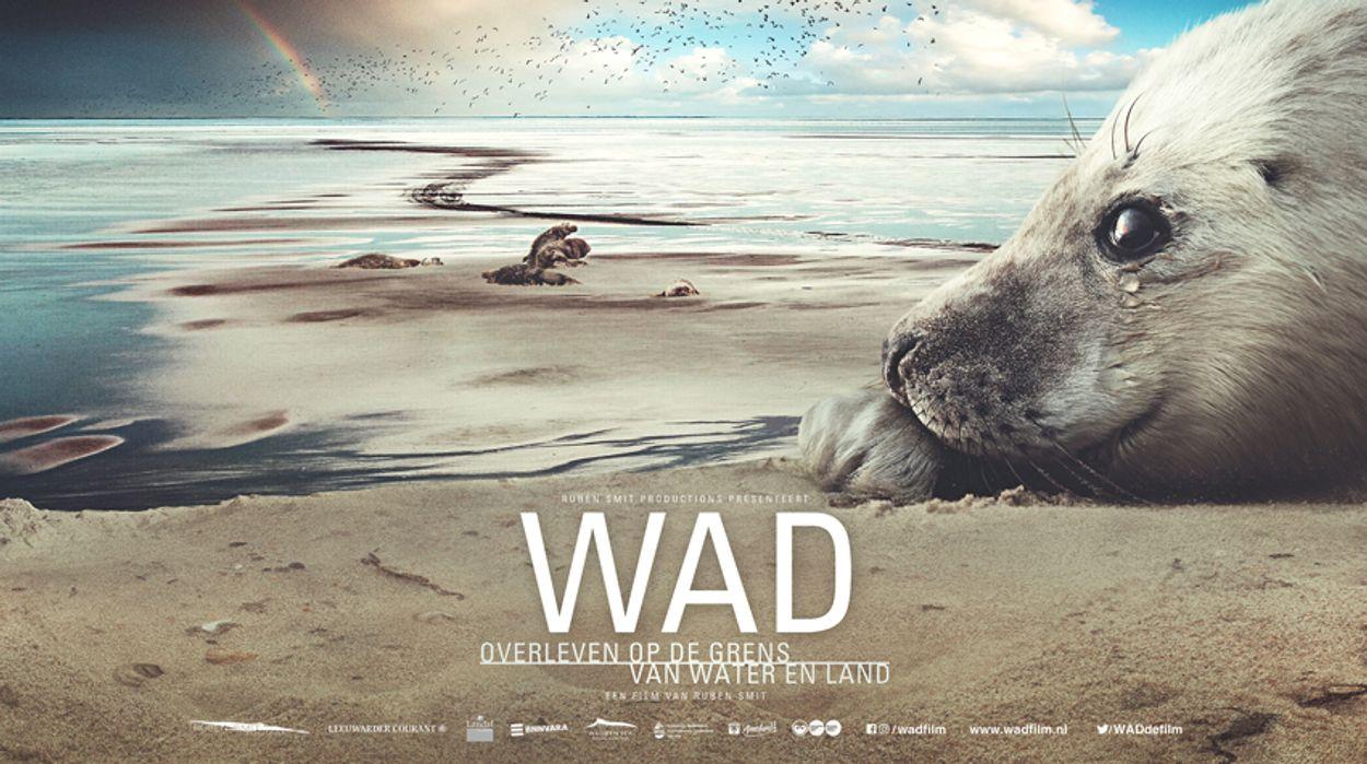 Afbeelding van Wadfilm: overleven op het wad