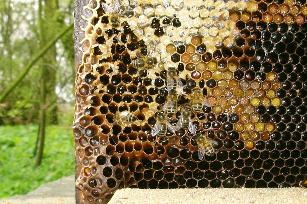 Afbeelding van Verbod bijengif nauwelijks effect