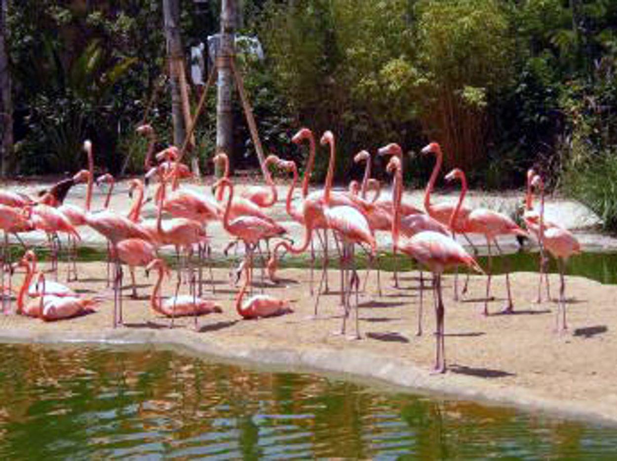 Afbeelding van Flamingo's kleuren Veluwemeer roze