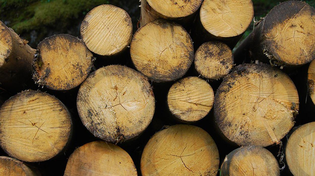 Afbeelding van Greenpeace naar rechter om bijstoken biomassa