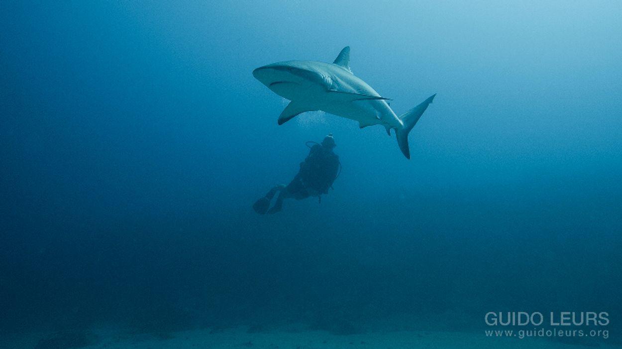 Afbeelding van Haaien beter beschermd