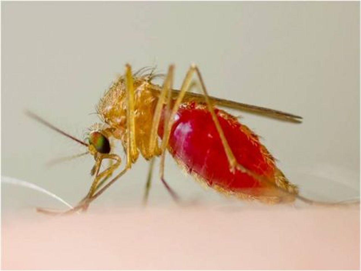 Afbeelding van Nog weinig muggenoverlast gemeld op Muggenradar.nl