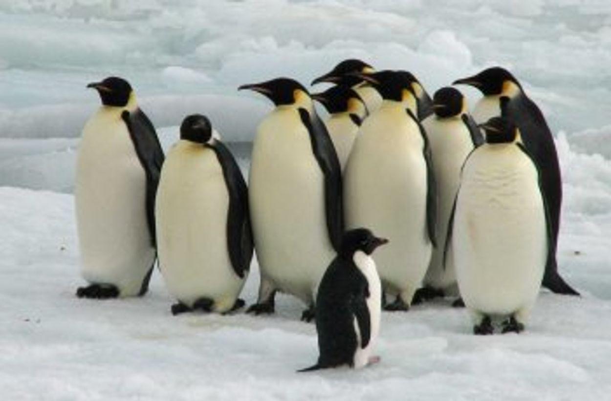 Afbeelding van Rosszee wordt grootste beschermde zeepark