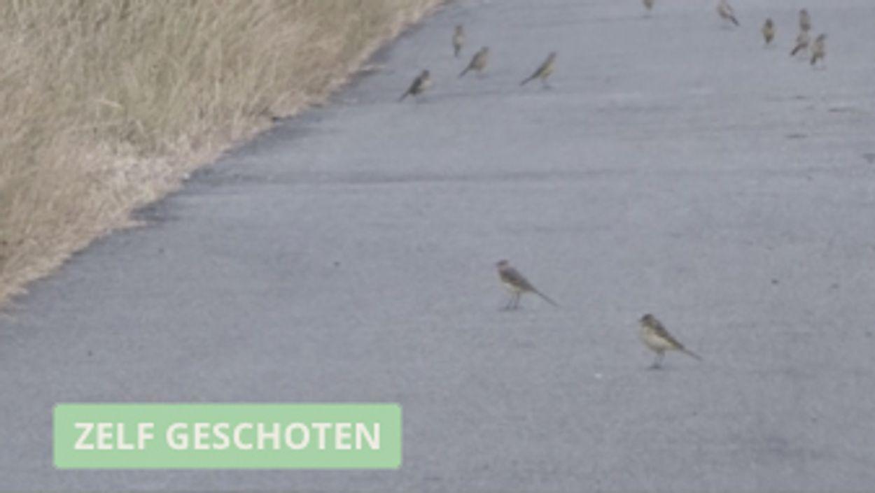 Afbeelding van Winnaar Zelf Geschoten: Hermelijnen jagen op gele kwikstaarten
