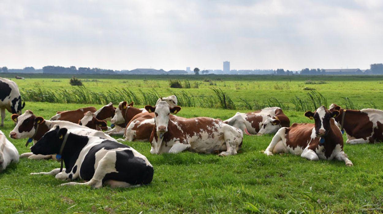 Afbeelding van Oudewater koopt 100 bomen voor koeien