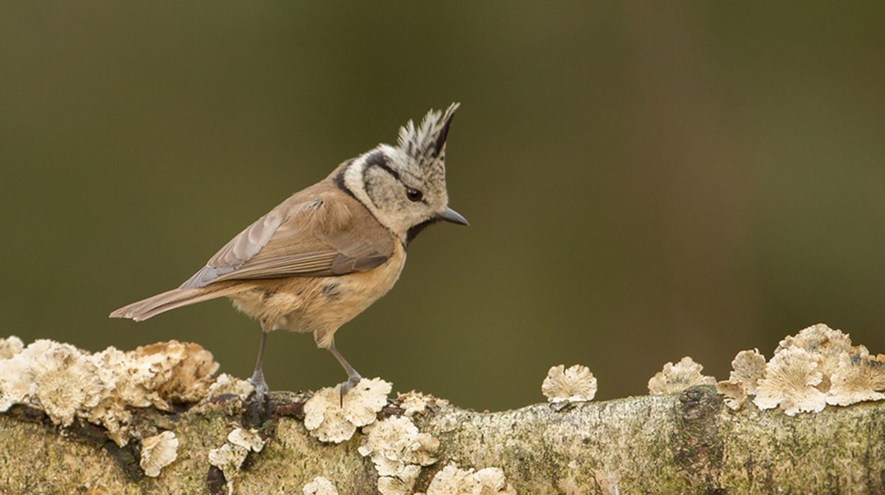 Afbeelding van Fotoserie: de mooiste vogelkuiven