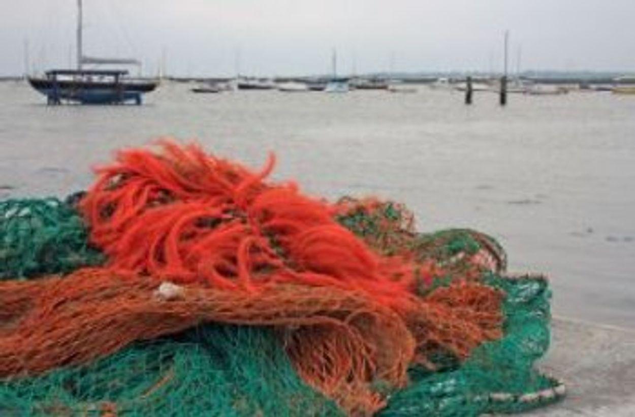 Afbeelding van 1500 kg visnetten verwijderd en ontdekking nieuwe soorten
