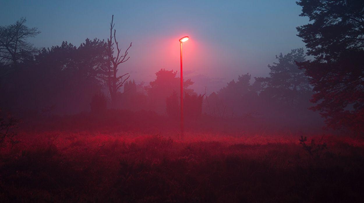 Afbeelding van Rood licht hindert activiteit vleermuizen niet