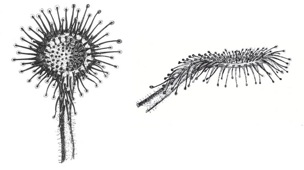 Afbeelding van Botanische revolutie
