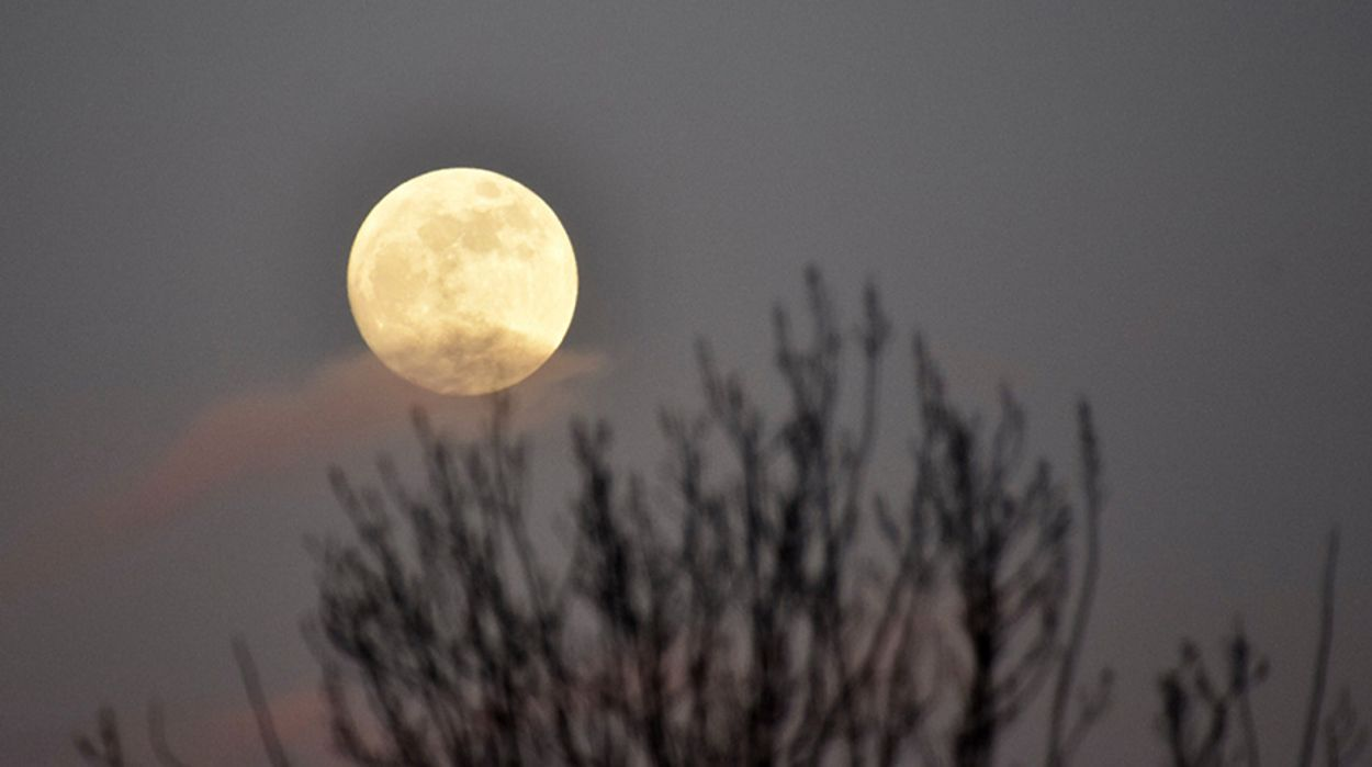 Afbeelding van Eerste plantje op de maan vriest dood
