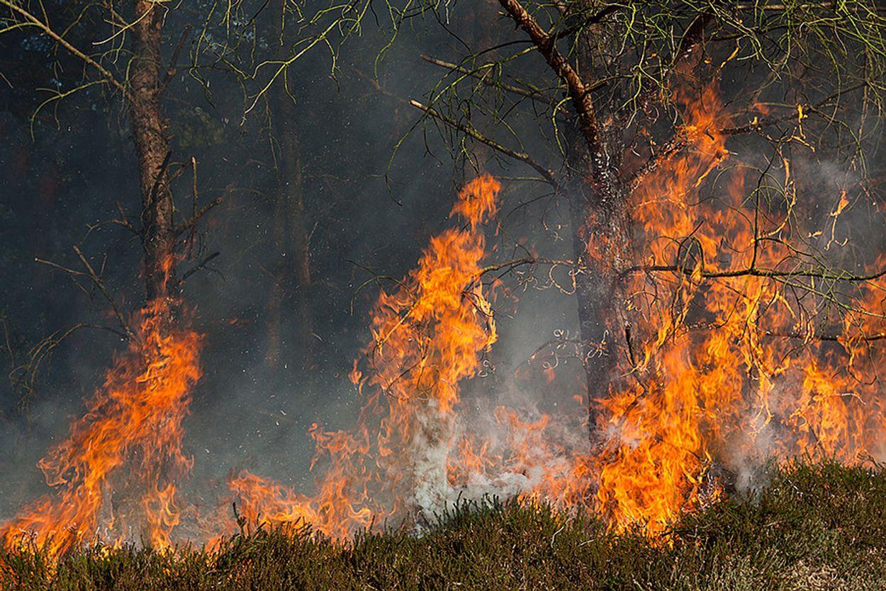Afbeelding van Bosbranden Sydney duren voort