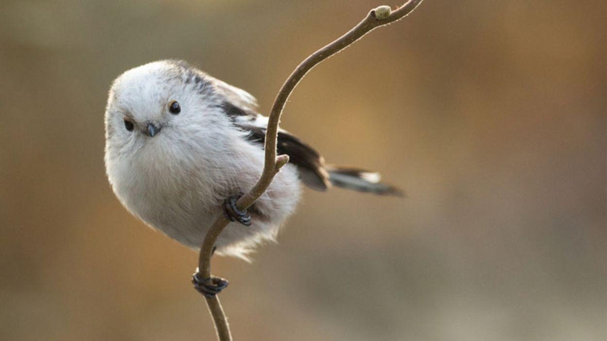 Afbeelding van Waarom er dit jaar minder vogels uit het Noorden lijken te trekken