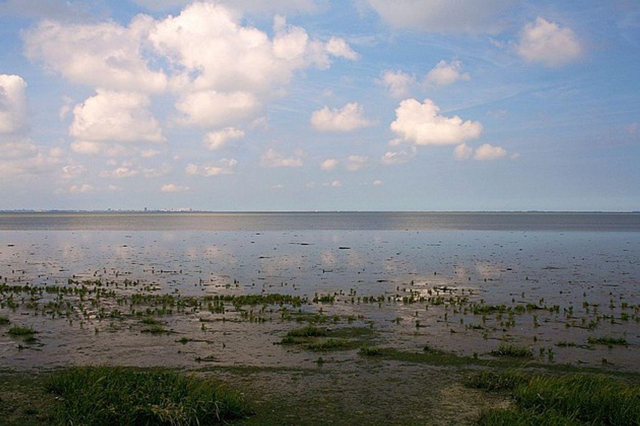 """Afbeelding van """"Afname wadplaten en vogelsoorten in gaswinningsgebied Waddenzee"""""""