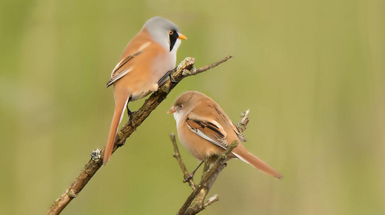 Afbeelding van Vogelspel: match man en vrouw