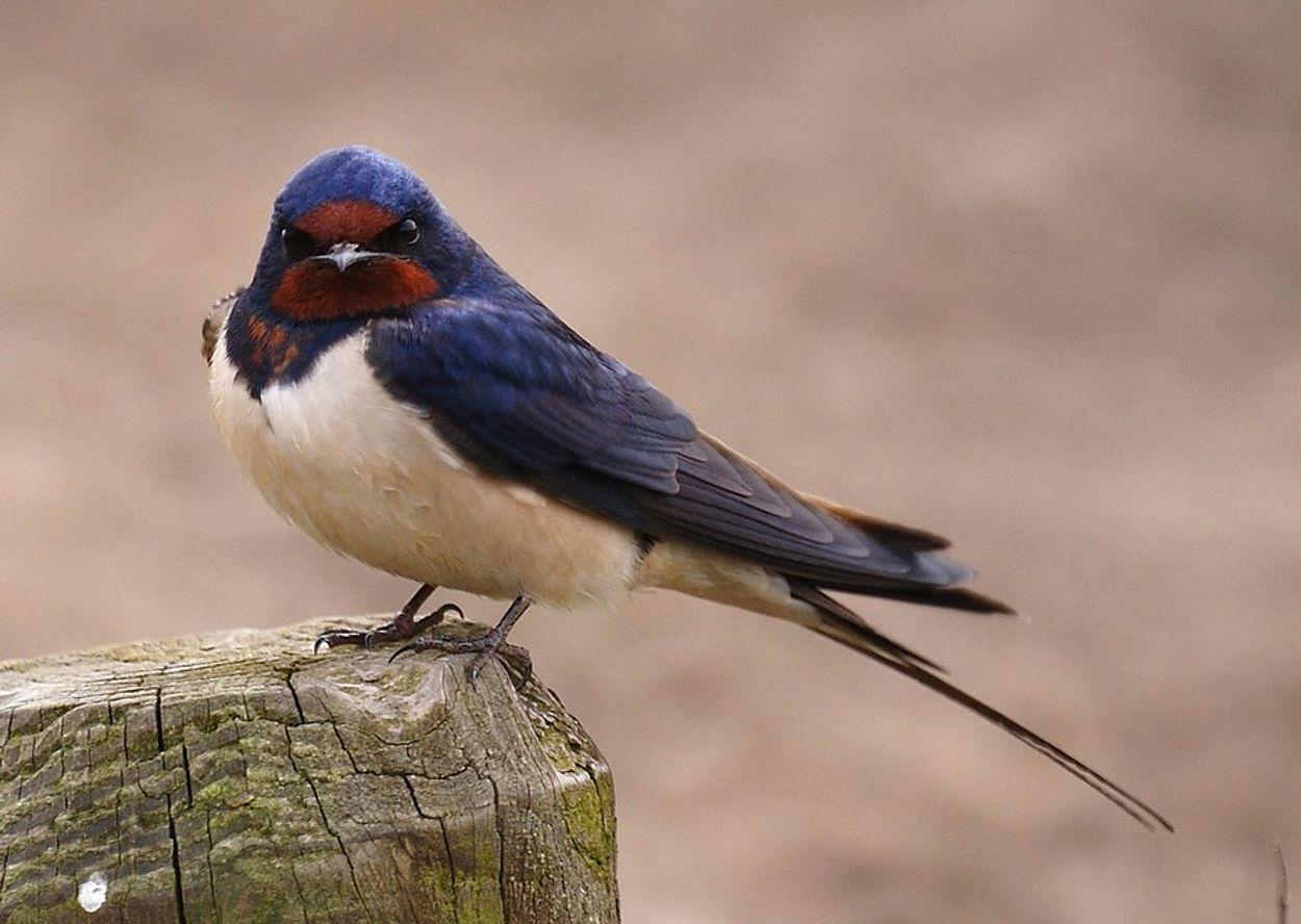 Afbeelding van Boos kijkende vogels!