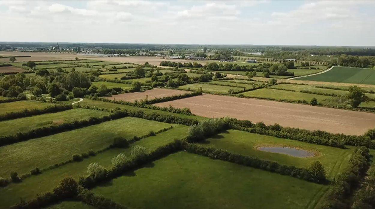 Afbeelding van Urgenda en boeren gaan samen 50.000 bomen planten