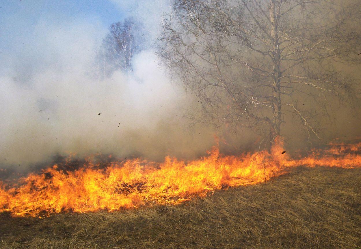 Afbeelding van Natuurbrand bij het Drentse plaatsje Elim onder controle