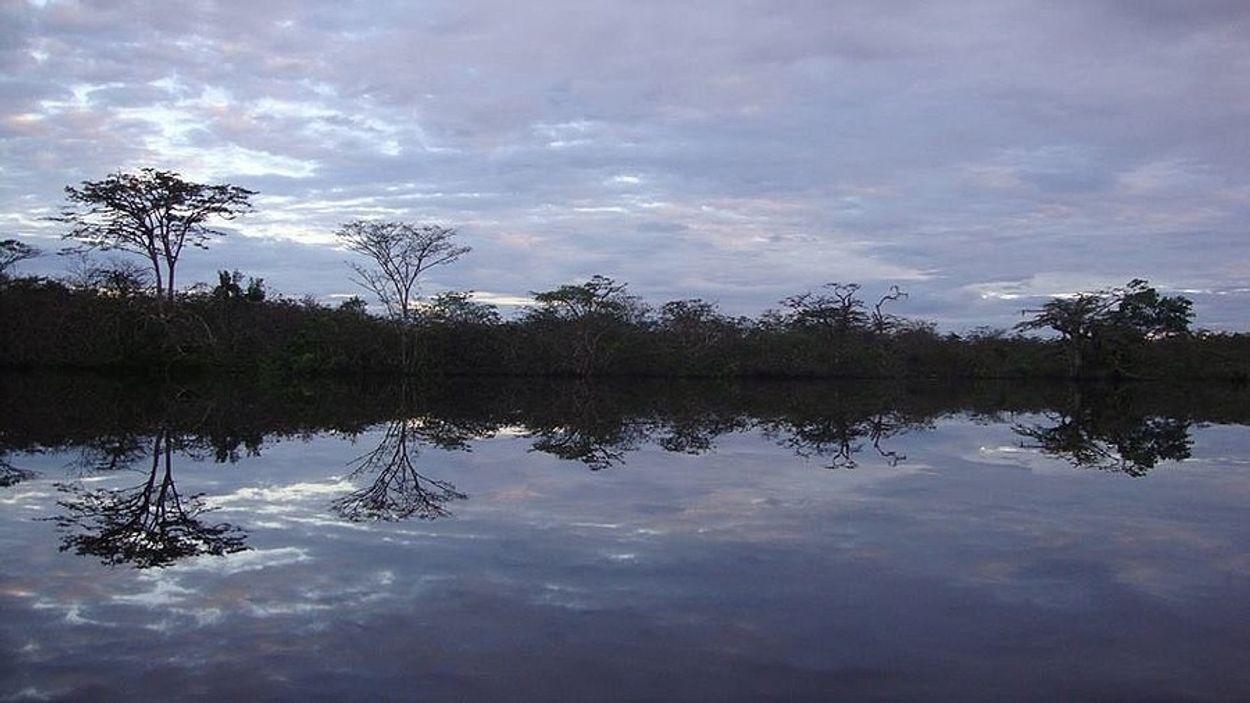 Afbeelding van Honderden nieuwe soorten in Amazoneregio