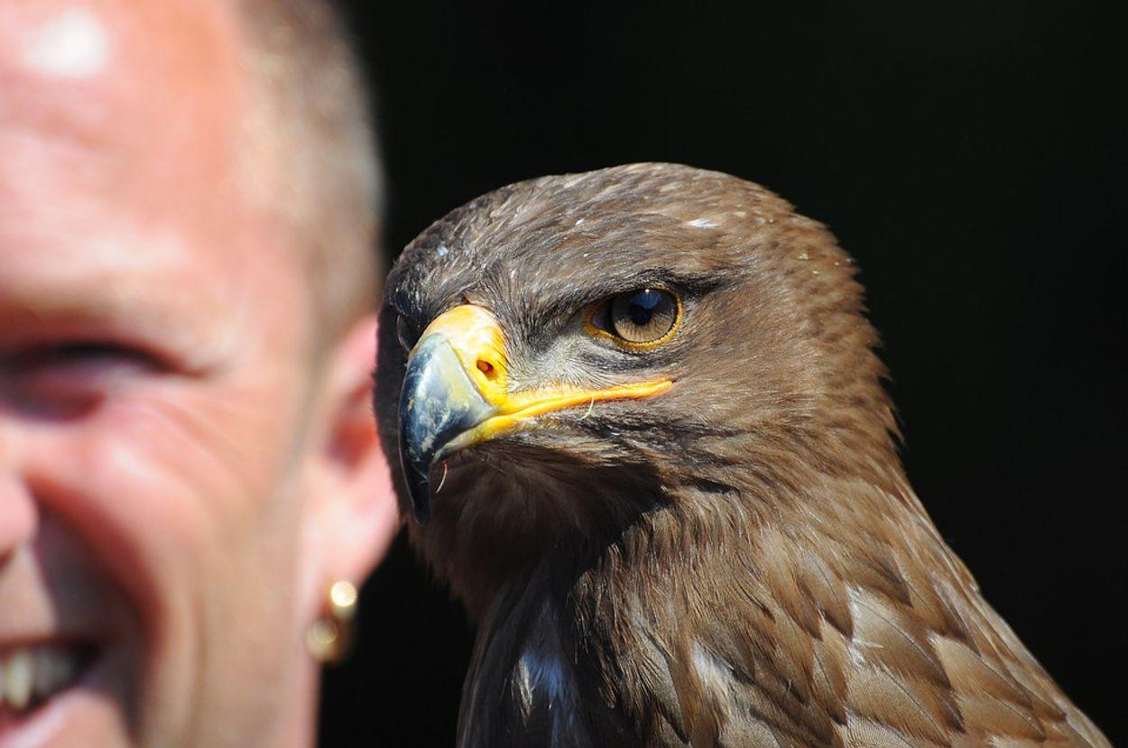 Afbeelding van Geen shows meer met roofvogels en uilen in Antwerpen